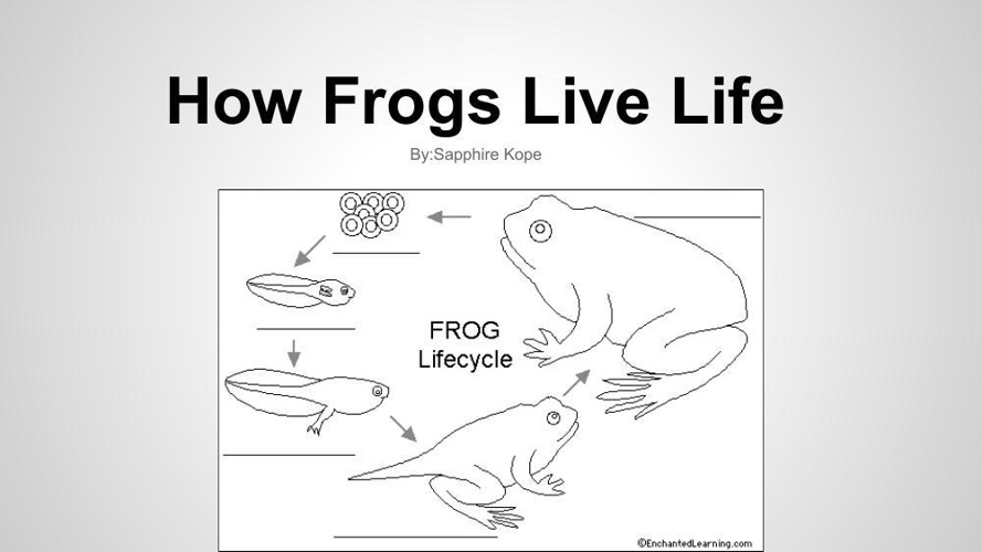 Frog Story