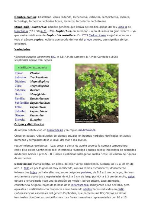 Euphorbia peplus Diego J. Iglesias