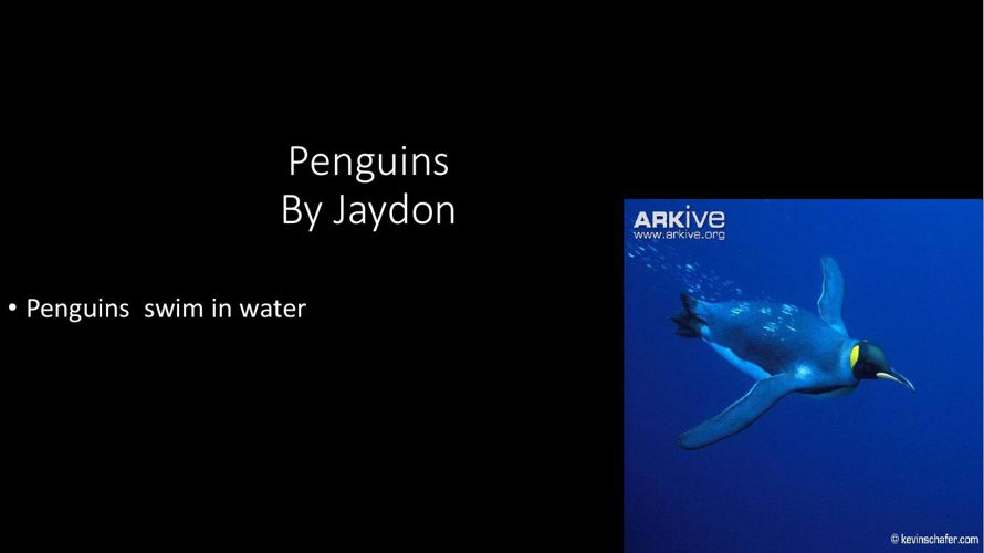Penguins By Jaydon