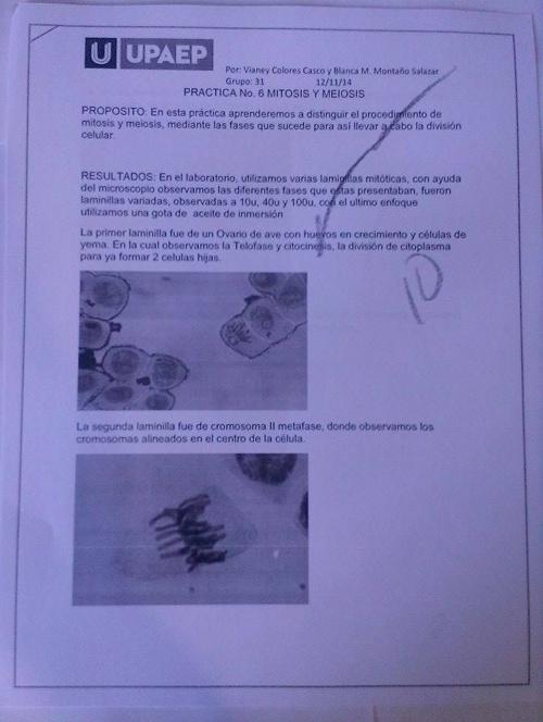 Practica No. 6 MITOSIS Y MEIOSIS