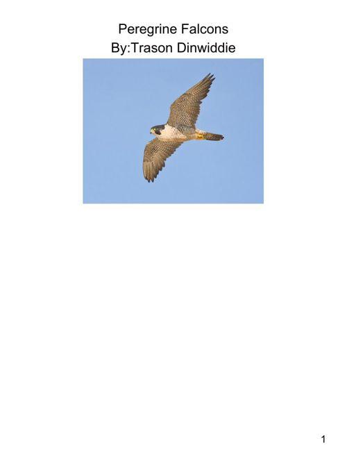 Falcon Book