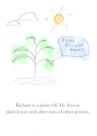 Photosynthesis For Kids!