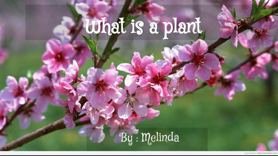 What makes a plants (1)