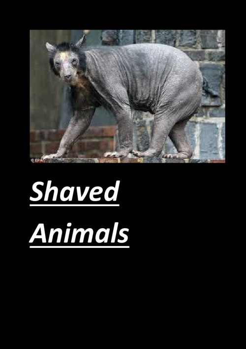 Shaved Animals