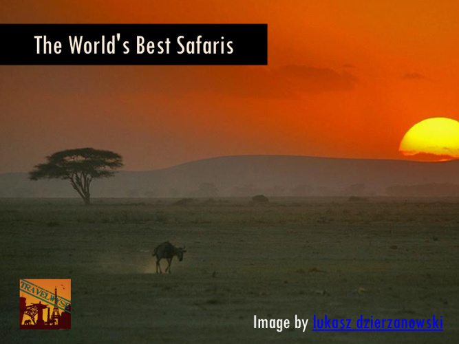 The World's Best Safaris