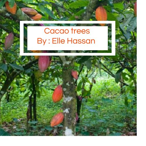 Cacao trees by Elle