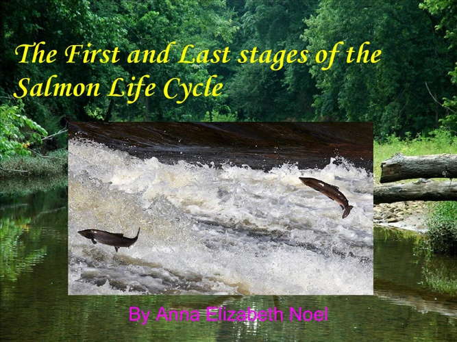 The First and Last Stages of the Salmon Life Cycle