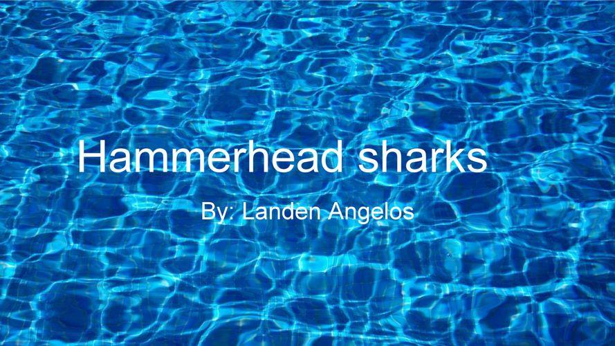 Non-fiction Book - Landen Angelos