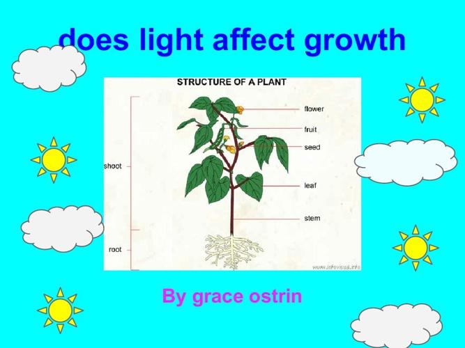 Grace's plant book