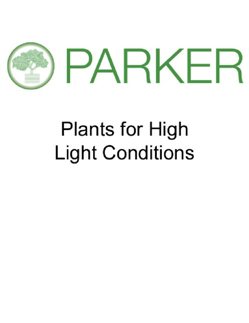 Plants for High Light Conditions