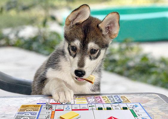 ellie & monopoly 2 9 15 x678