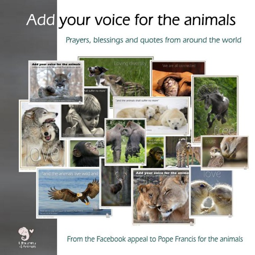 Add your voice for the animals campaign