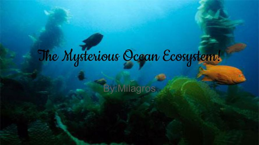 The Mysterious Ocean Ecosystem!