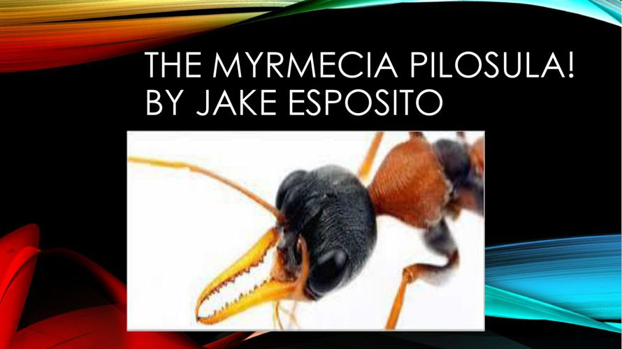Jack Jumper Jake Esposito