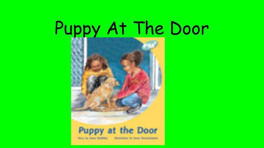 Lyisorn Puppy At The Door - Turq 2 (2)