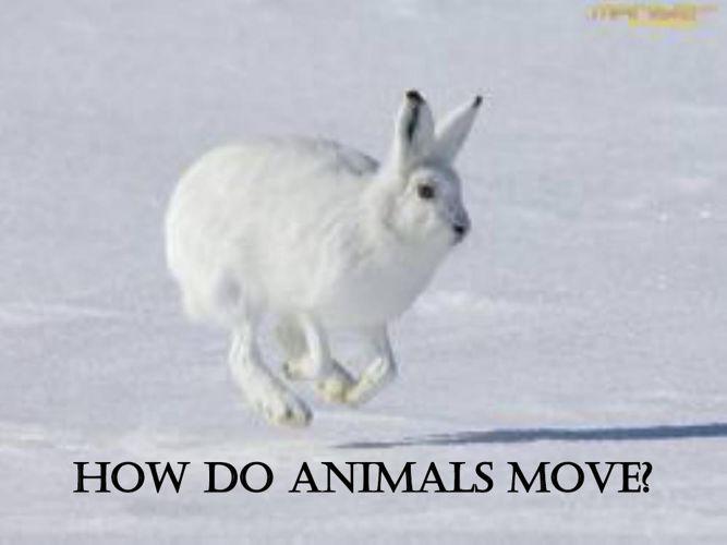 PPT ANIMALS MOVEMENTS