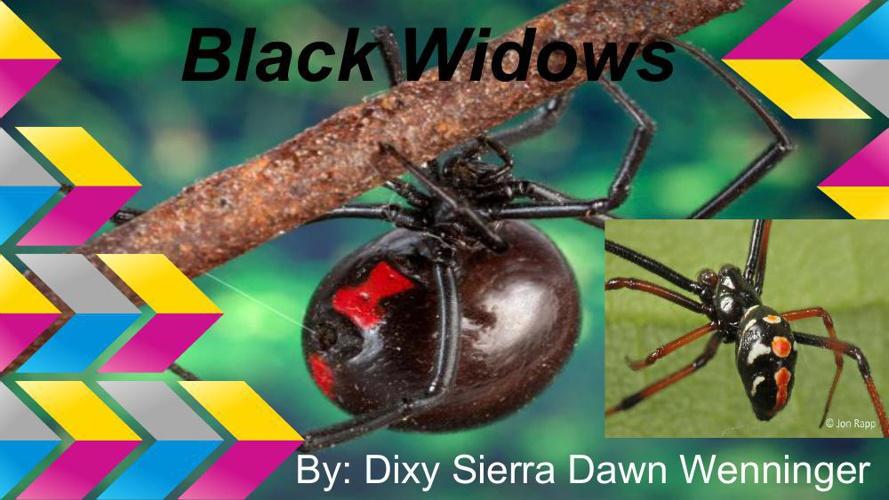 Black Widows - Dixy Wenninger (1)