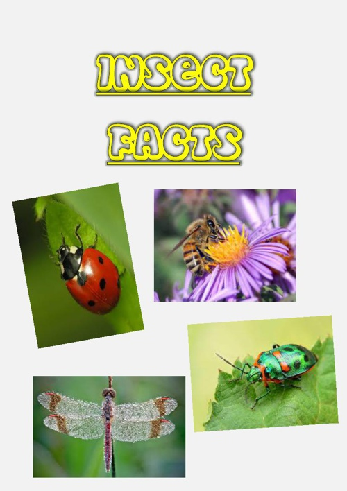 Copy of Insects