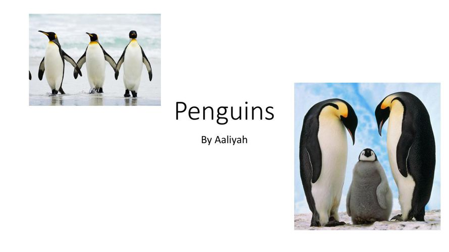 Penguins By Aaliyah