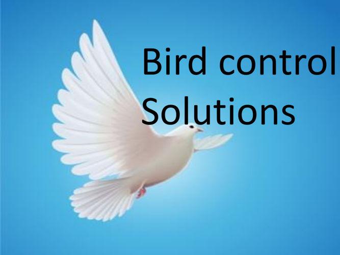 Bird control solution