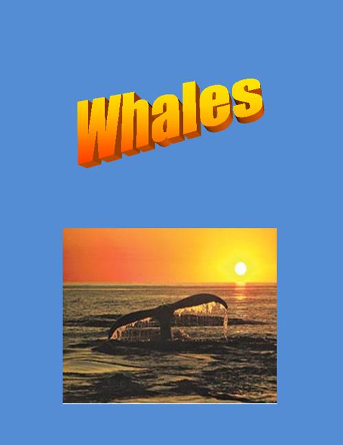Whale Book