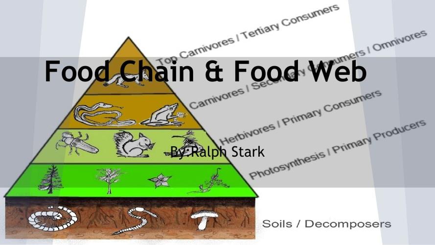 Food Chains & Food Web