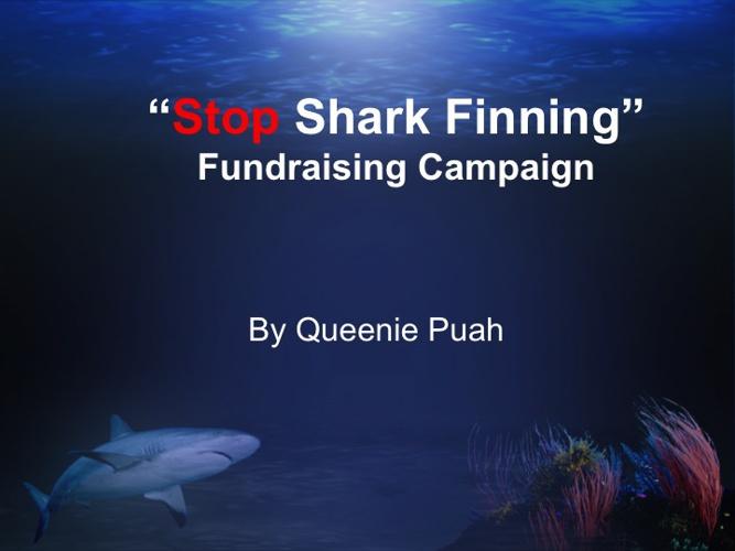 """""""Stop Shark Finning"""" Transmedia Project"""