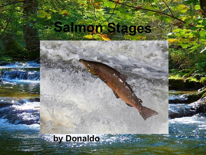 salmon stages