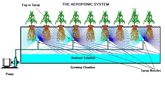 Growing Systems