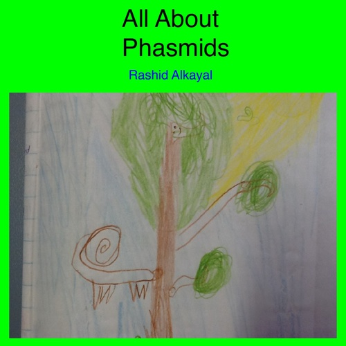 All About Phasmids