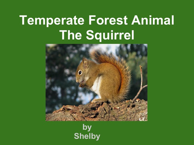 shelby squirrel