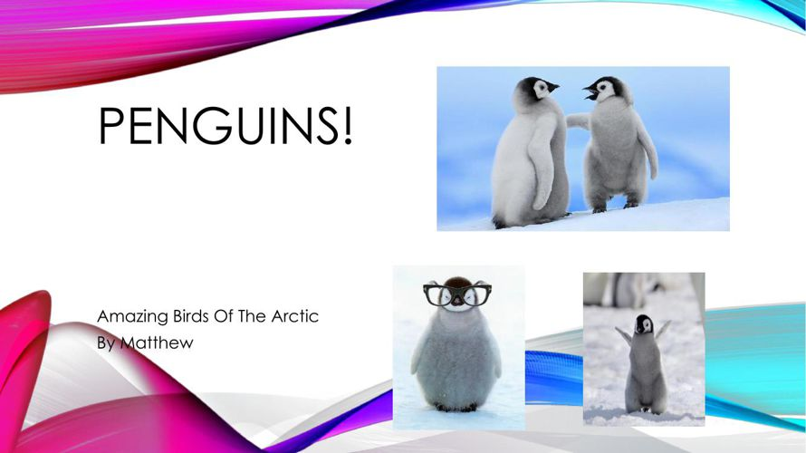 Penguins! By Matthew