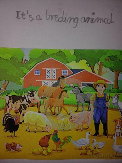Animal Spelling Contest