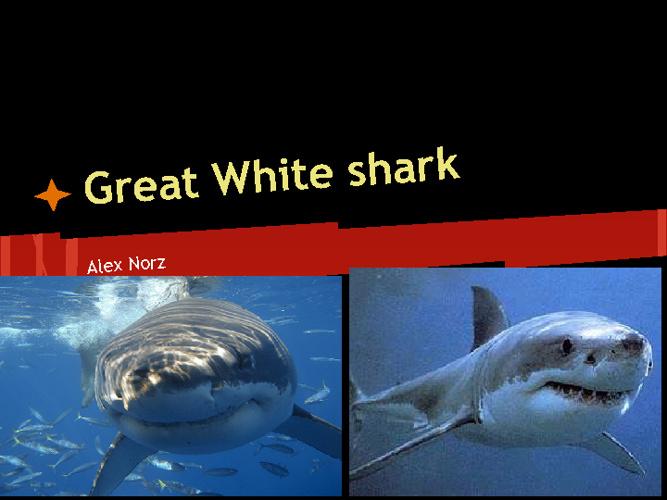 Sea Animal Presentation
