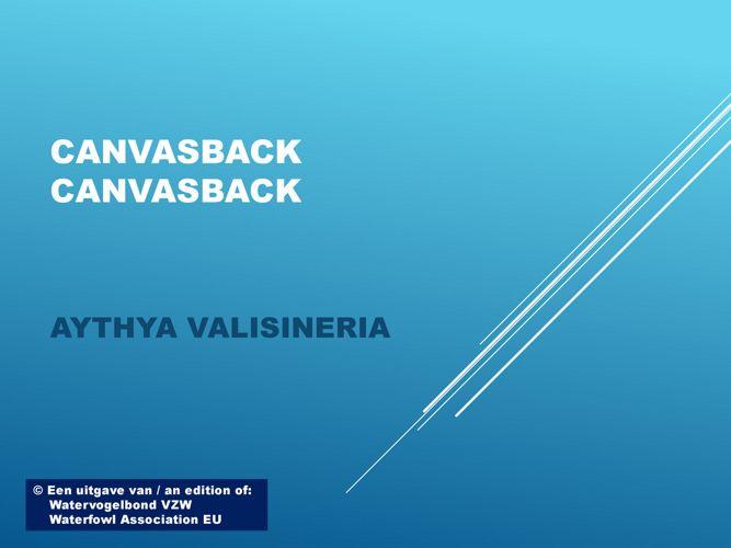 Canvasback - Canvasback