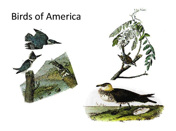 Mrs. Hutmacher's Birds of America
