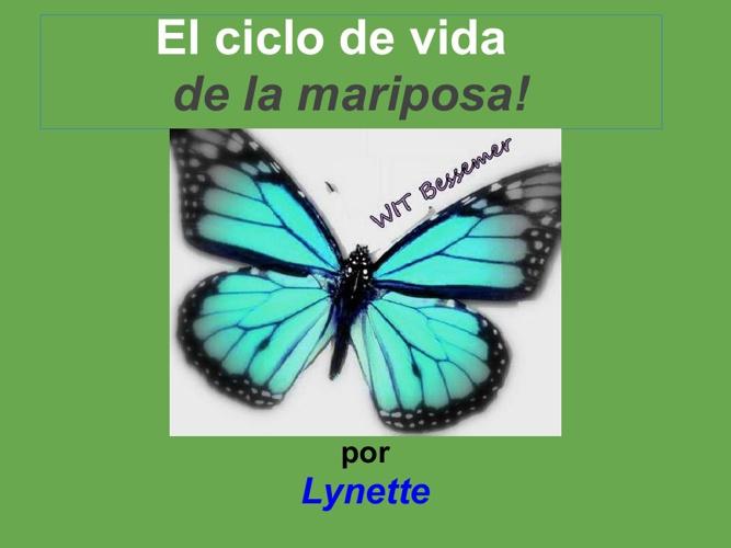 Lynette mariposa