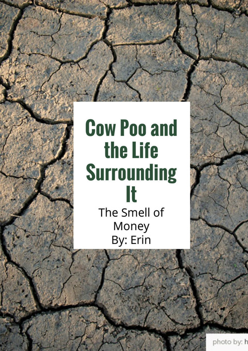 Cow Poo And The Life Surrounding It, The Smell Of Money