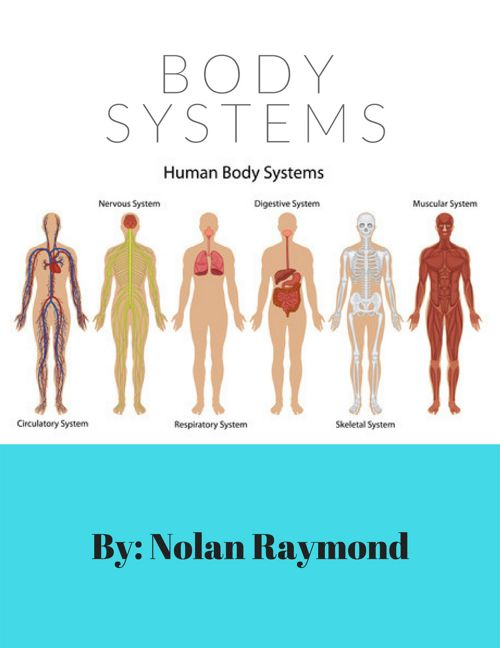 body systems nolan