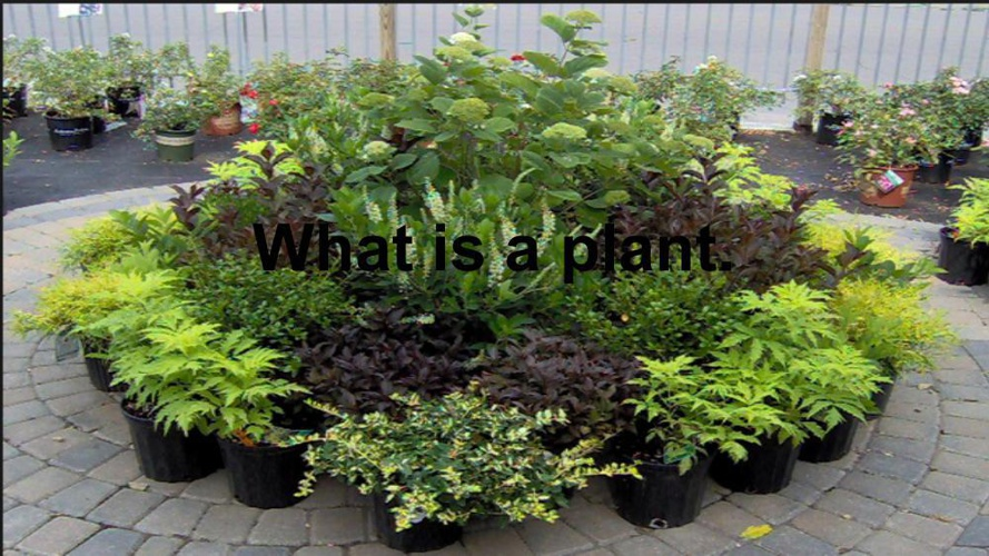 What is a plant-