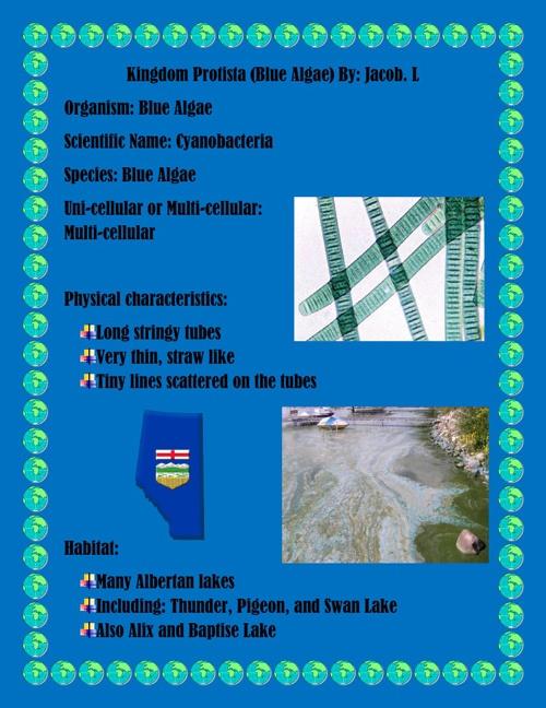 Kingdom Protista Blue Algae