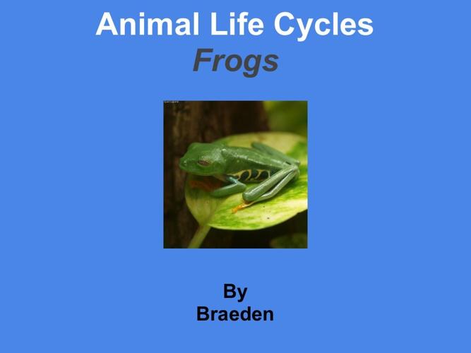 Braedenfrogs