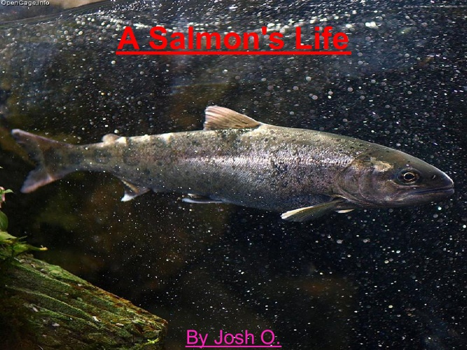 Josh Salmon