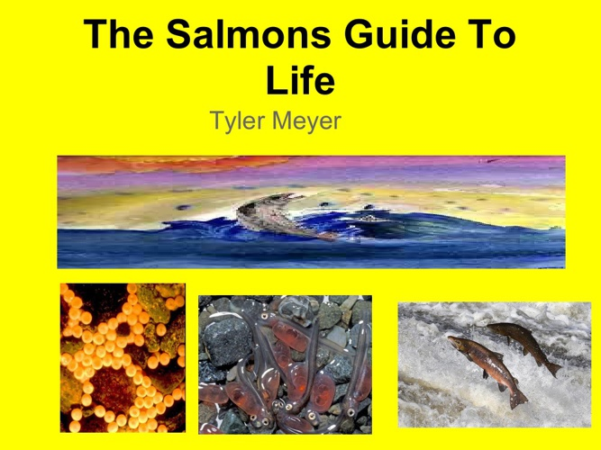 The Salmon Guide to Life