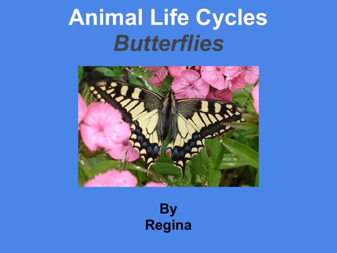 regina butterfly