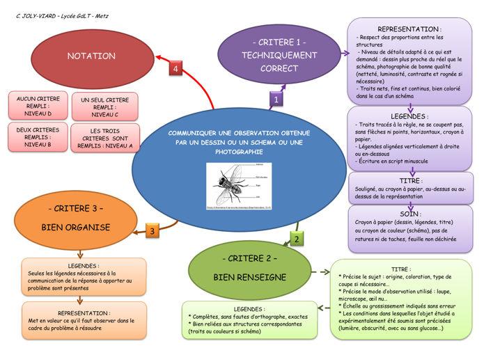 criteres de réussite étape 3_communication_ECE