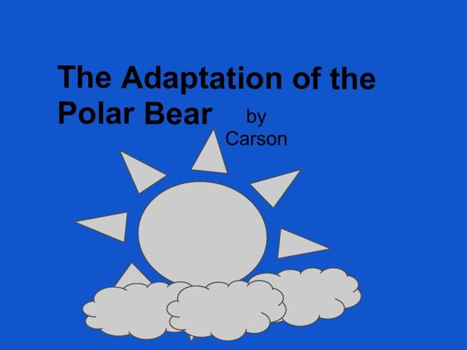 The Adaptations of a Polar Bear
