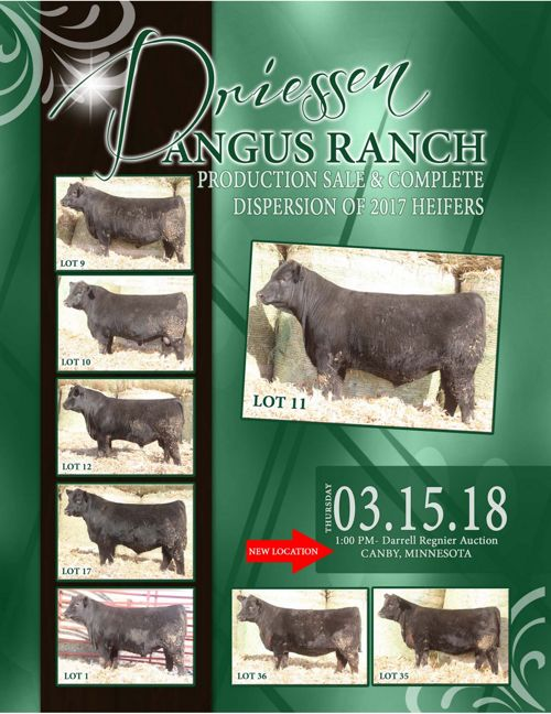 Driessen Angus Ranch Production Sale