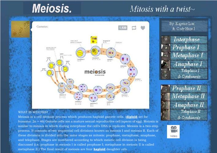 meiosis flipbook
