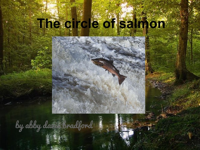 THE CYCLE of SALMON